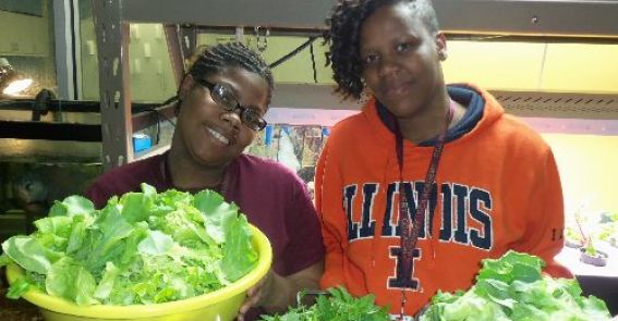 <h1>Urban Agriculture/Ecology</h1> In our seed-to-plate program, students grow, harvest, and prepare vegetables from CCA Academy's aquaponics systems and outdoor urban gardens.