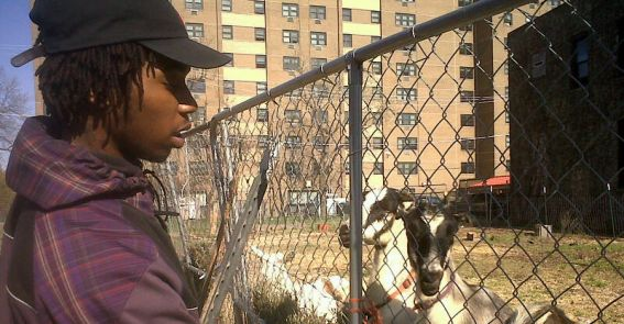 <h1>Urban Agriculture</h1> CCA Student Feeding a Goat